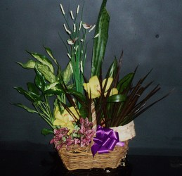 Dish Garden Basket #3 from Flower Works II, your Medford area florist
