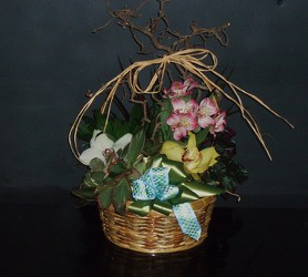 Dish Garden Basket #5 from Flower Works II, your Medford area florist