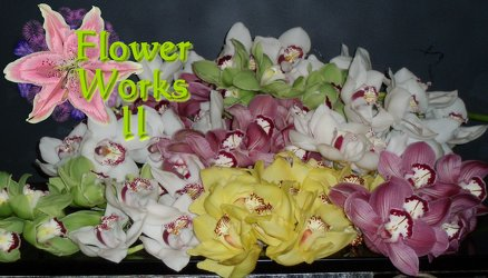 Dozen Orchids Boxed from Flower Works II, your Medford area florist
