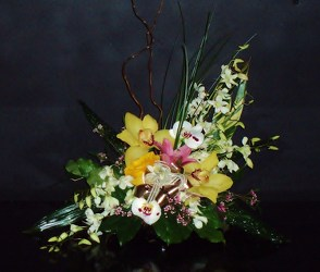 Tropical Slant from Flower Works II, your Medford area florist